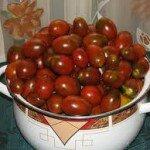 Лучшие_ помидоры _сорта_ томат _черный_ мавр