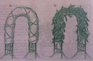 укрытие роз на арках и перголах
