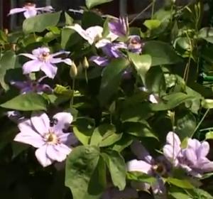 бал цветов - bal-tsvetov