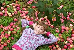 сбор-урожая-яблок-sbor-urozhaya-yablok